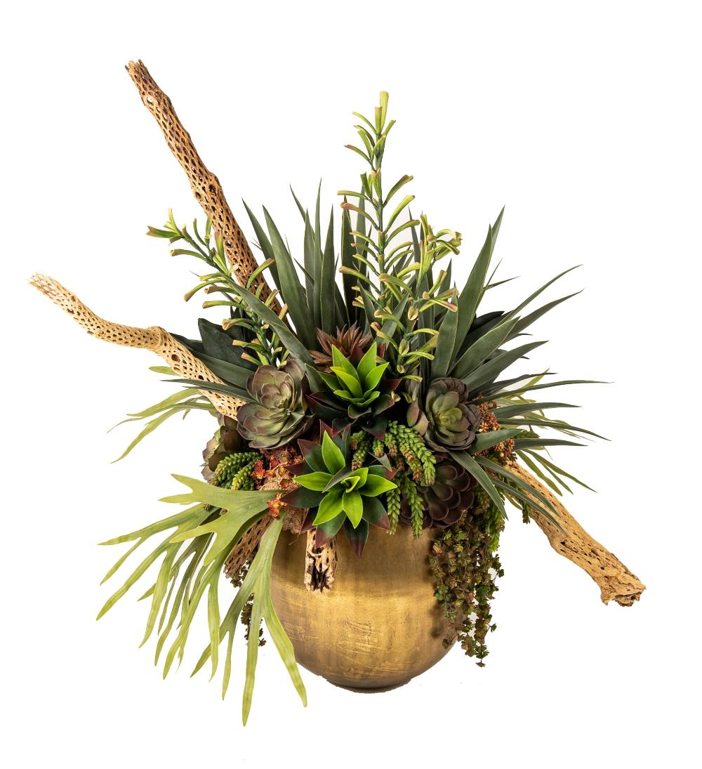 Cholla Succulents Resize 3